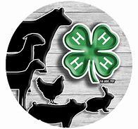 Livestock and 4-H emblem